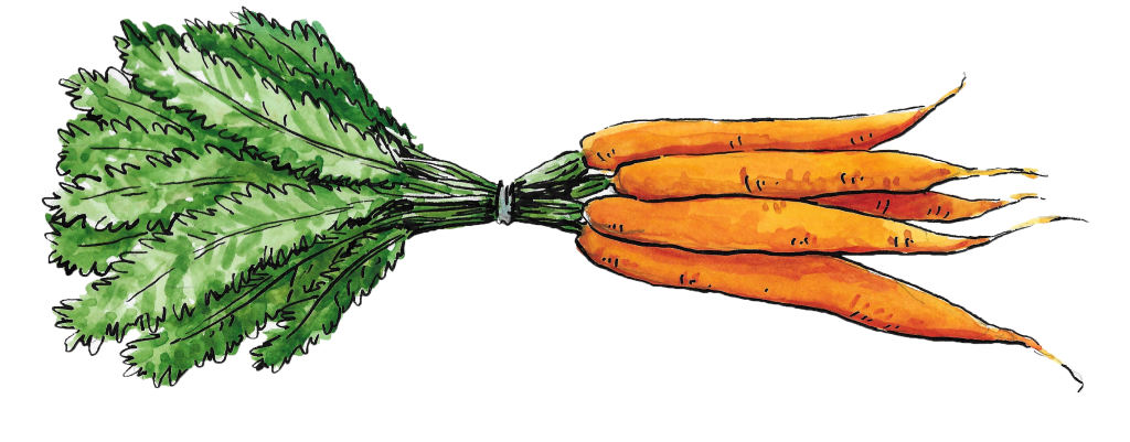 An illustration showing a bunch of carrots.
